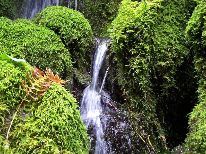 Oregon vattenfall med nedgångormbunken royaltyfri foto