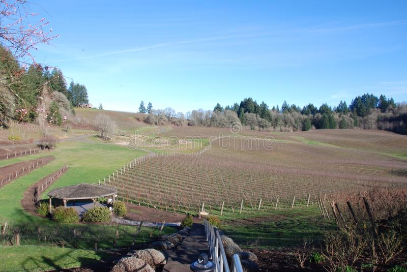 Oregon Vineyard stock images