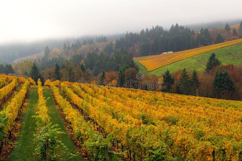 Oregon vingård i nedgångsäsongen USA Amerika royaltyfria bilder