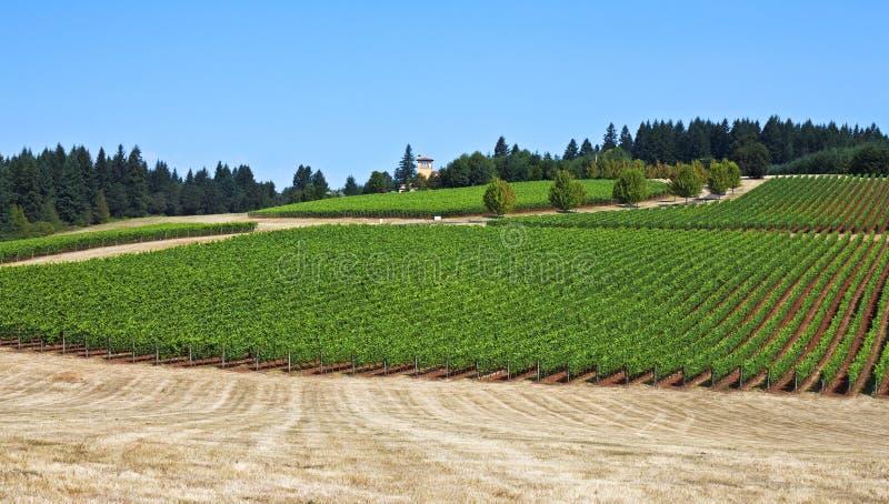 Oregon vinland royaltyfri bild