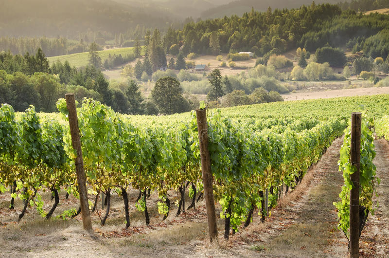Oregon wina kraj obrazy stock
