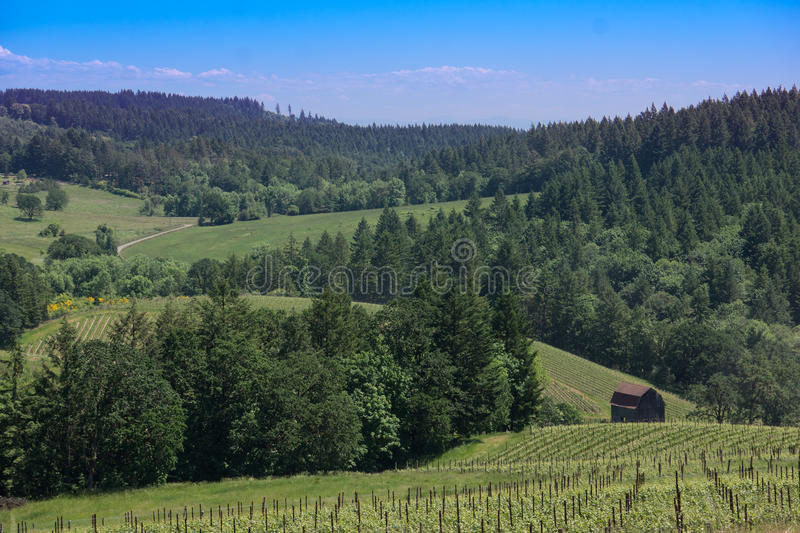 Oregon Wine Country Landscape royalty free stock image