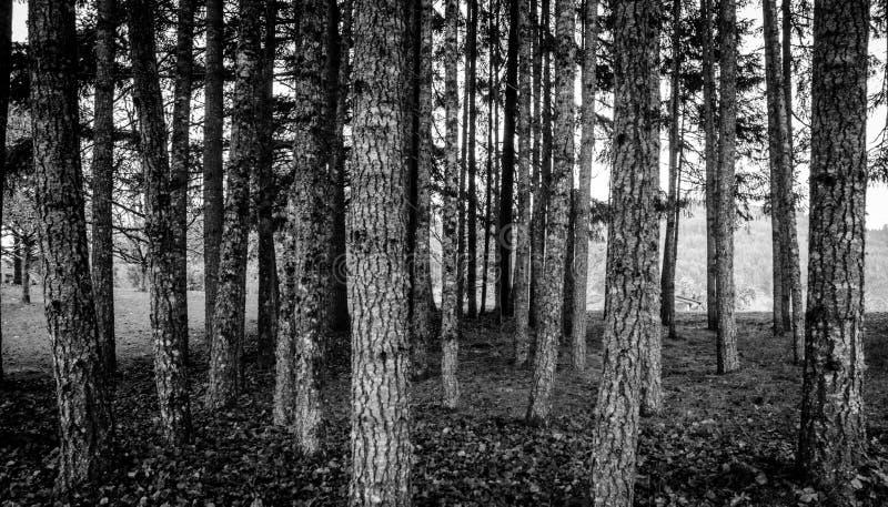 Oregon woods royalty free stock image
