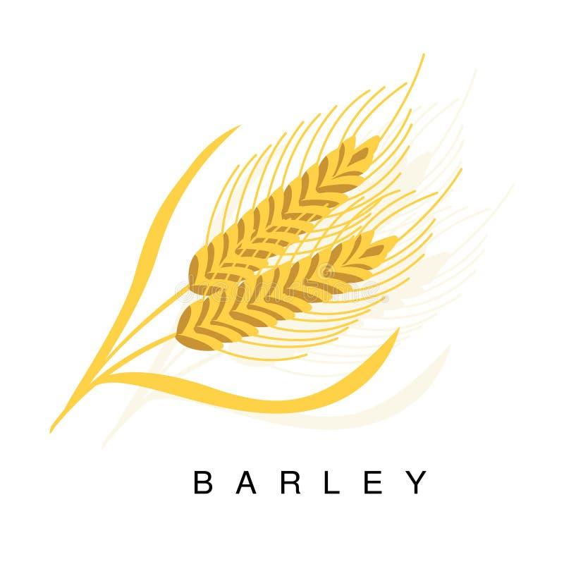 Oreille d'orge, illustration d'Infographic avec la plante cultivée réaliste de céréale et son nom illustration de vecteur
