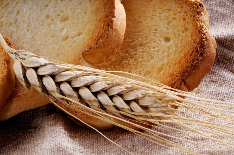 Download Oreille de blé photo stock. Image du jaune, normal, toast - 45371756