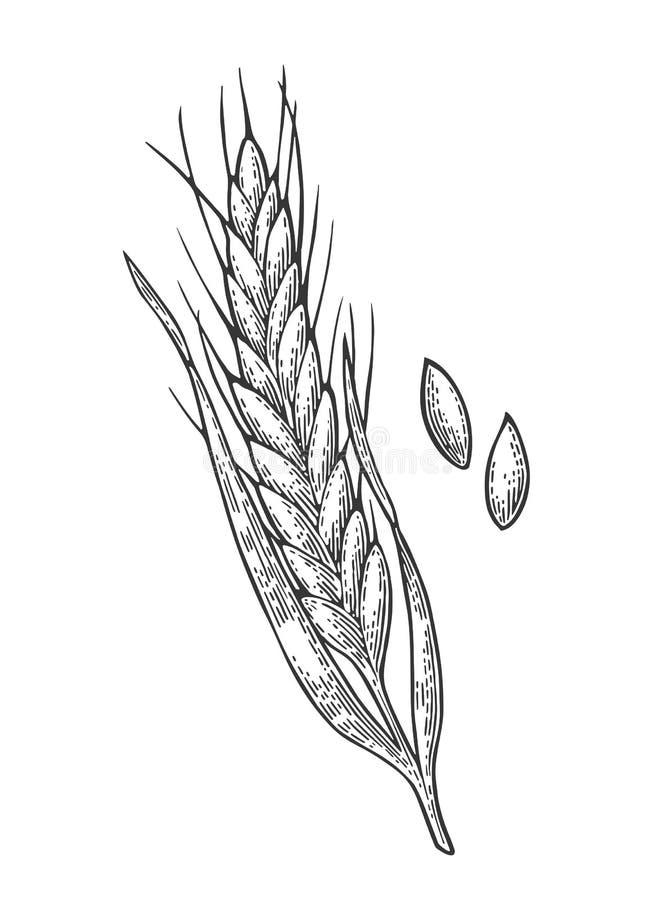 Oreille de blé, d'orge et de malt de grain Illustration gravée par vintage de vecteur illustration de vecteur