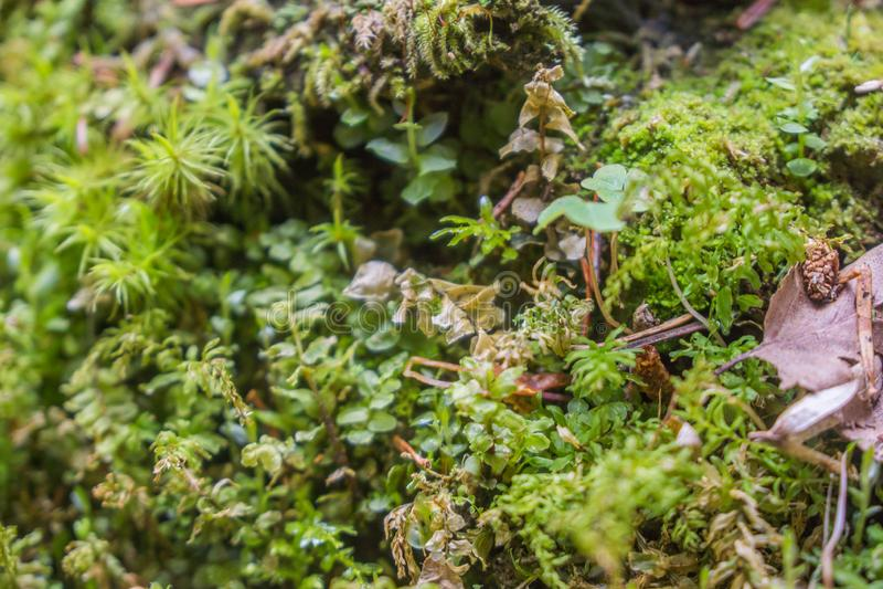 Oreiller de mousse sur le sol de forêt en parc national de borjomi photographie stock