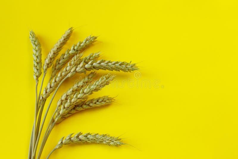 Oreilles, avoine ou orge détaillée de blé sur un fond jaune ?l?ment naturel d'ingr?dient image stock