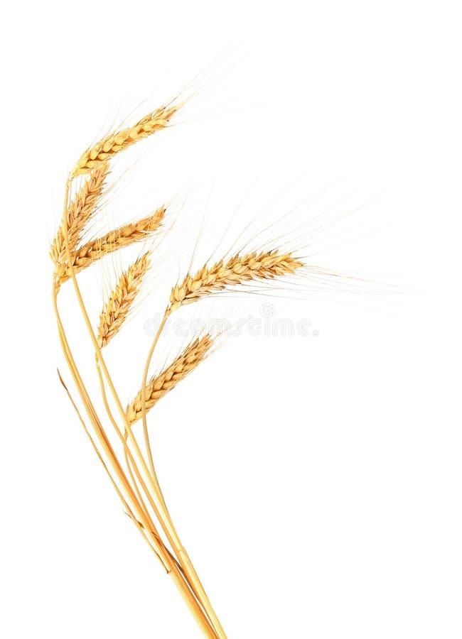 Oreilles de blé. photo stock
