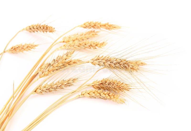 Oreilles de blé. images stock