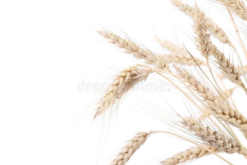 Oreilles de blé. photos stock