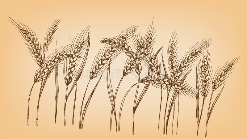 Oreilles de blé illustration stock