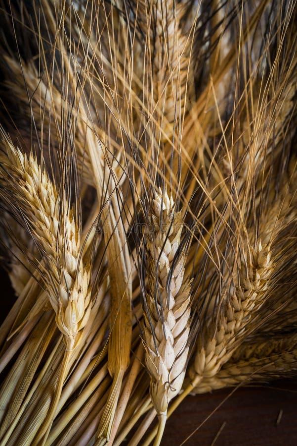 Oreilles de blé photos libres de droits