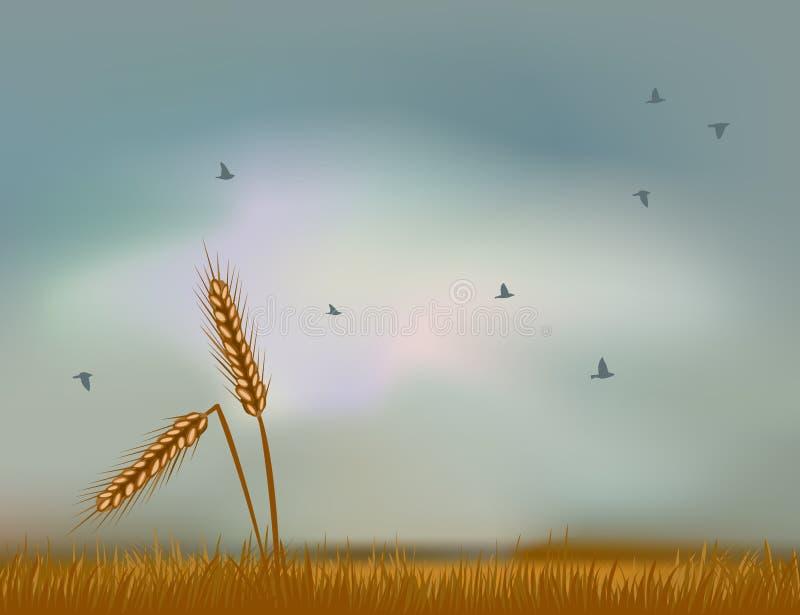 Oreilles de blé contre le ciel illustration libre de droits
