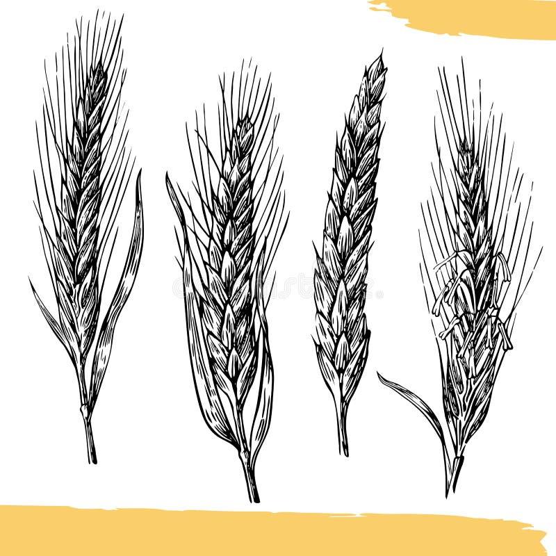 Oreilles de blé Couleur noire et blanche Croquis de boulangerie illustration stock