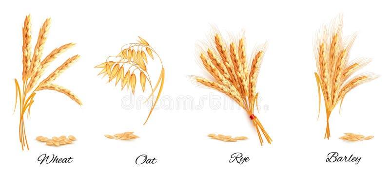 Oreilles de blé, d'avoine, de seigle et d'orge illustration de vecteur
