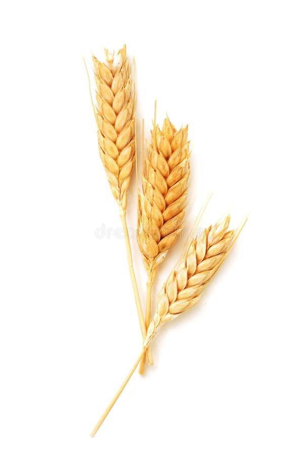 Oreilles de blé d'isolement image libre de droits