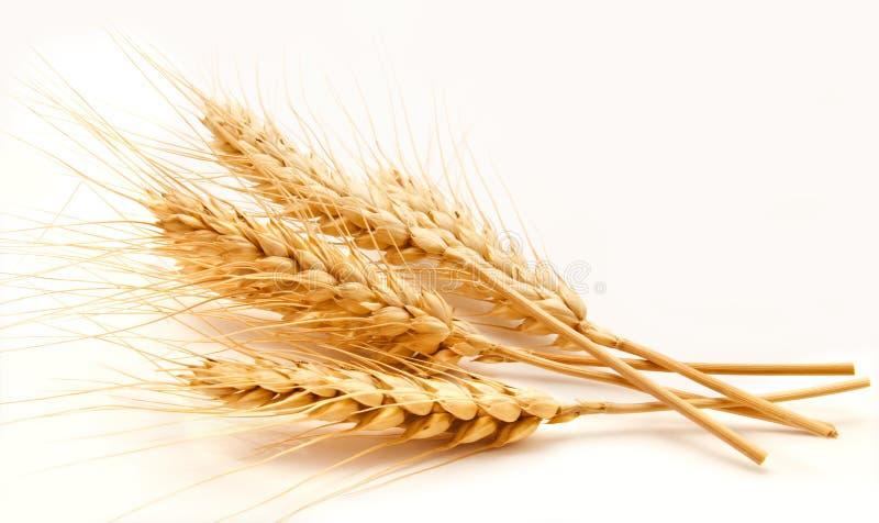 Oreilles de blé d'isolement sur un blanc photo stock