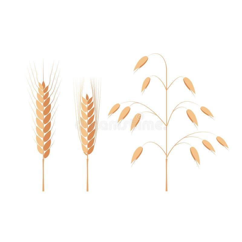 Oreilles de blé, d'orge et d'avoine illustration de vecteur