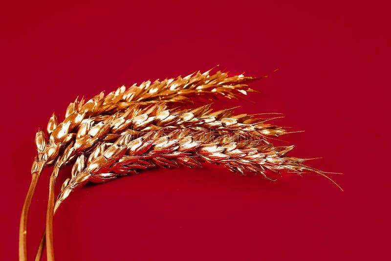 Oreilles de blé peintes avec la peinture d'or sur un fond rouge L'espace supérieur de copie de torsion Bl? d'or photographie stock