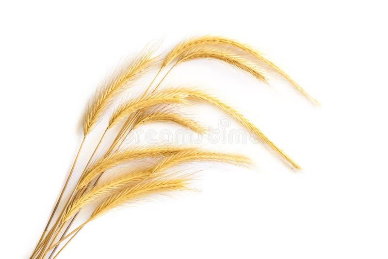 Download Oreilles De Blé Sur Le Fond Blanc Image stock - Image du texture, blé: 56481123