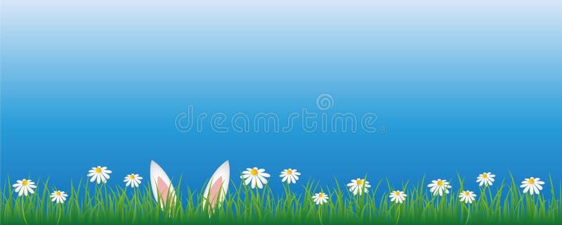 Oreilles de lapin dans le pré vert avec la bannière de fleurs de marguerite blanche avec l'espace de copie illustration libre de droits