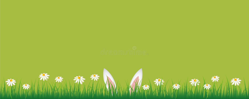 Oreilles de lapin dans le pré vert avec la bannière verte de fleurs de marguerite blanche avec l'espace de copie illustration libre de droits