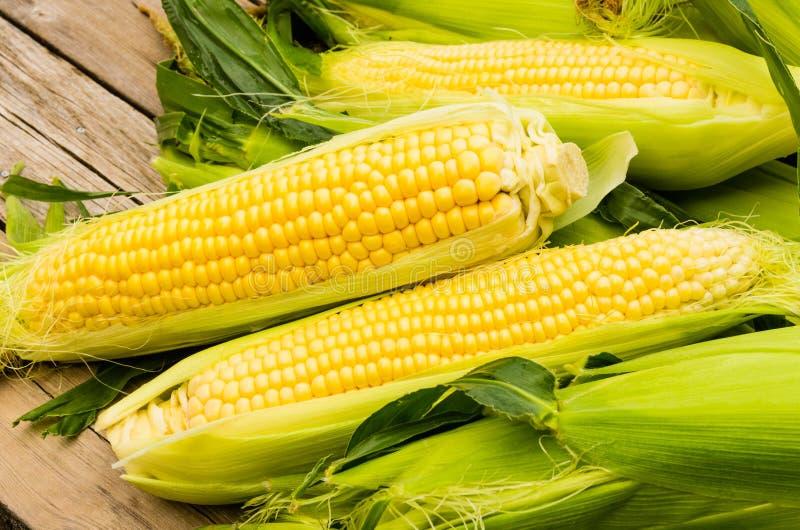 Oreilles de maïs jaune frais photos stock