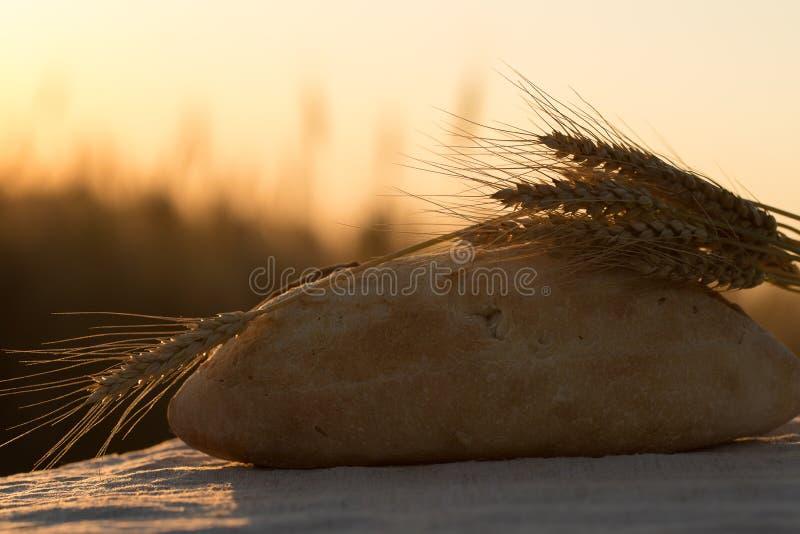 Oreilles de pain et de bl? pain et blé dans le coucher du soleil photo libre de droits