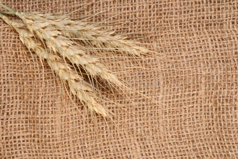 Oreilles de Rye sur le tissu image stock