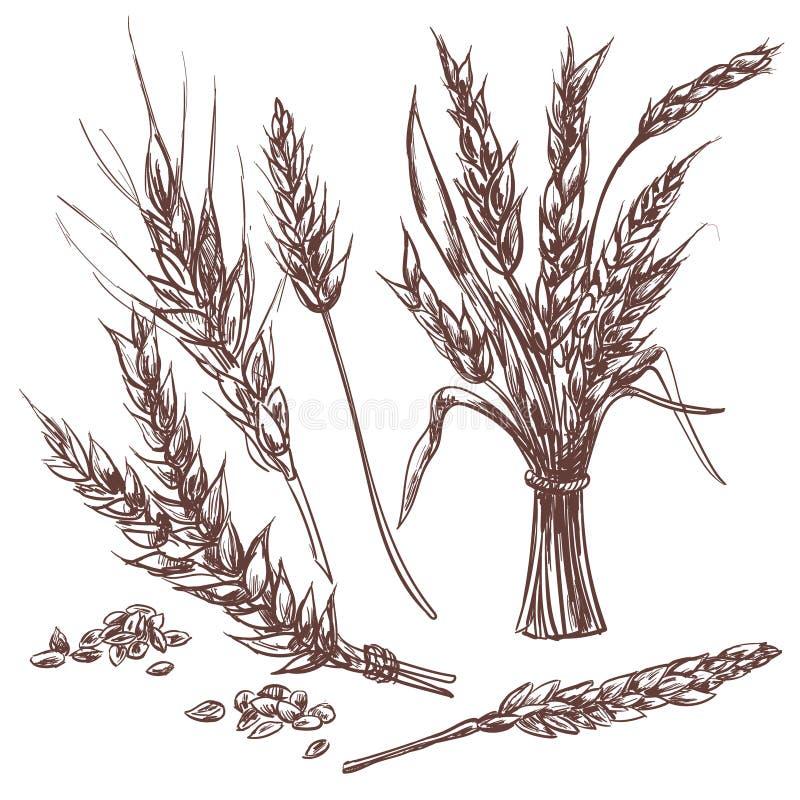 Oreilles tirées par la main de blé Icônes décoratives réglées illustration libre de droits