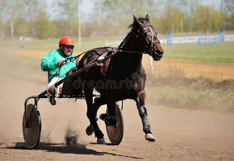 Orel, Russie - 30 avril 2017 : Course d'attelages Runni de cheval de Brown photos libres de droits