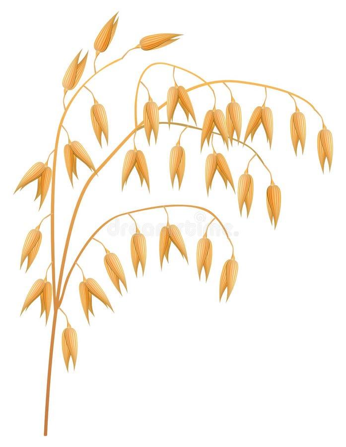 Orelha da aveia. ilustração do vetor