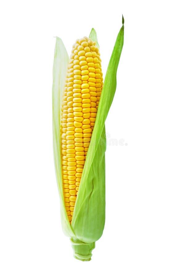 Orelha da espiga de milho ou de milho com as folhas frescas verdes isoladas no fundo branco com trajeto de grampeamento fotos de stock royalty free