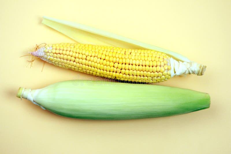 Orelha de milho, close up com espaço para a cópia fotos de stock