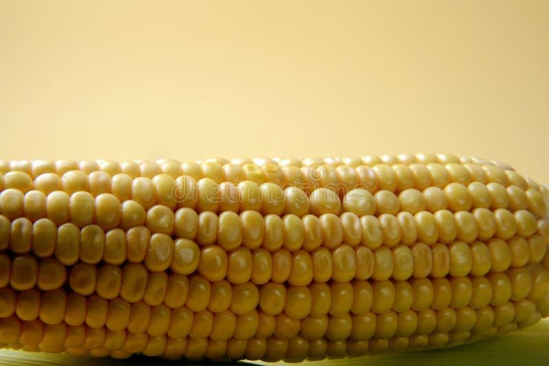 Orelha de milho, close up com espaço para a cópia fotos de stock royalty free