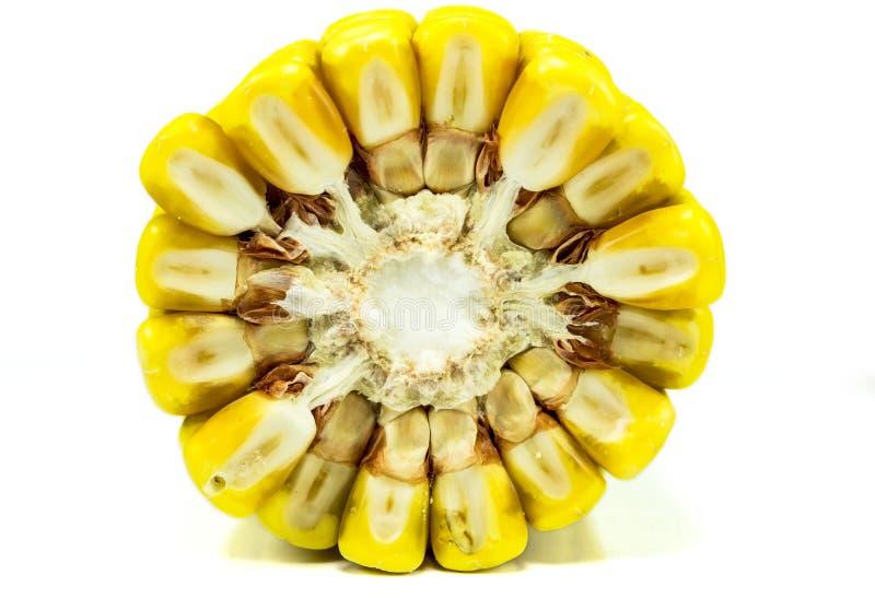 Orelha de milho, de seção transversal fotos de stock