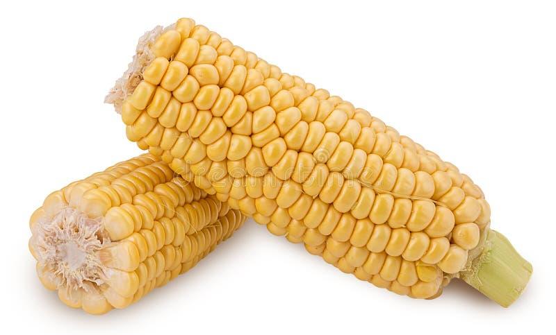 Orelha de milho Dois espiga de milho fresca, corte ao meio imagens de stock royalty free