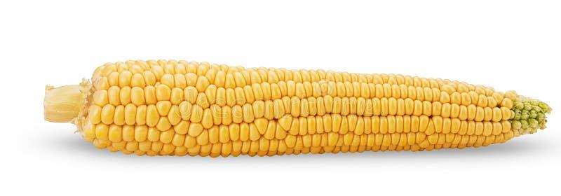 Orelha de milho Espiga de milho fresca fotos de stock