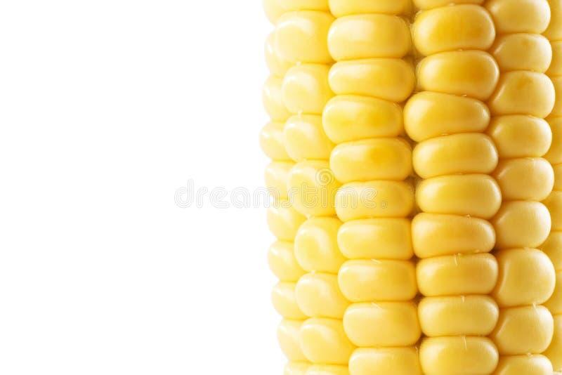 Orelha de milho fresca isolada no fundo branco fotos de stock