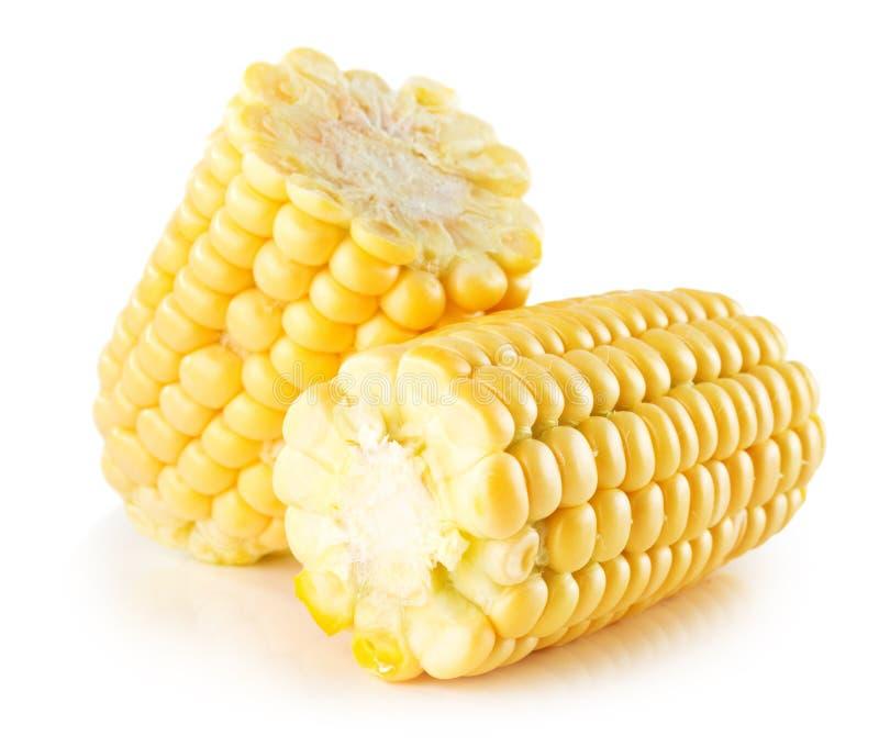 Orelha de milho fresca isolada no fundo branco imagem de stock royalty free