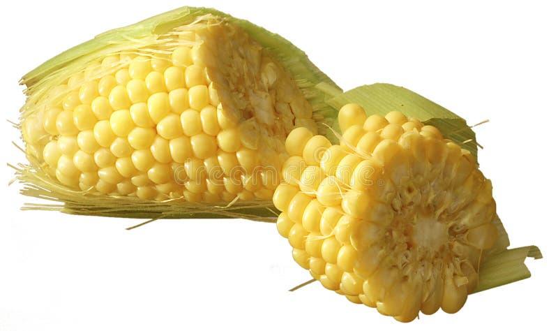Orelha de milho quebrada ao meio fotos de stock