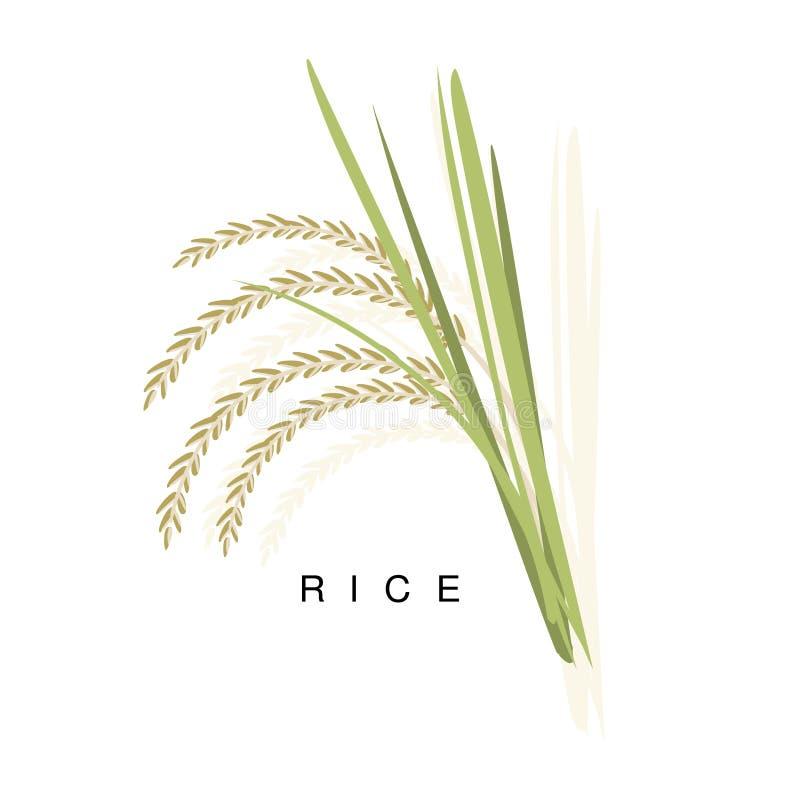 Orelha do arroz, ilustração de Infographic com a planta de colheita realística do cereal e seu nome ilustração do vetor