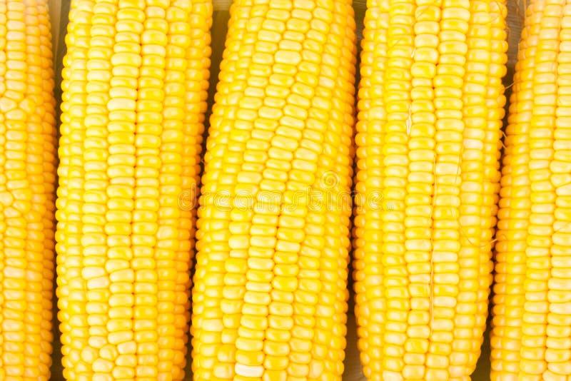 Orelha fresca do milho doce em núcleos das espigas ou grões do milho maduro no vegetal branco do fundo isolado foto de stock