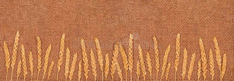 Orelhas da mentira do trigo em um guardanapo da juta Bandeira longa Fundo da textura Copie o espa?o foto de stock