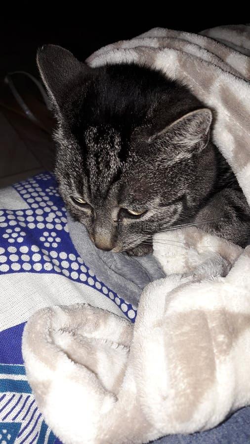 Orelhas de gato imagens de stock royalty free