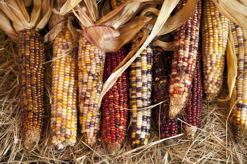Orelhas de Halloween da acção de graças de milho fotos de stock