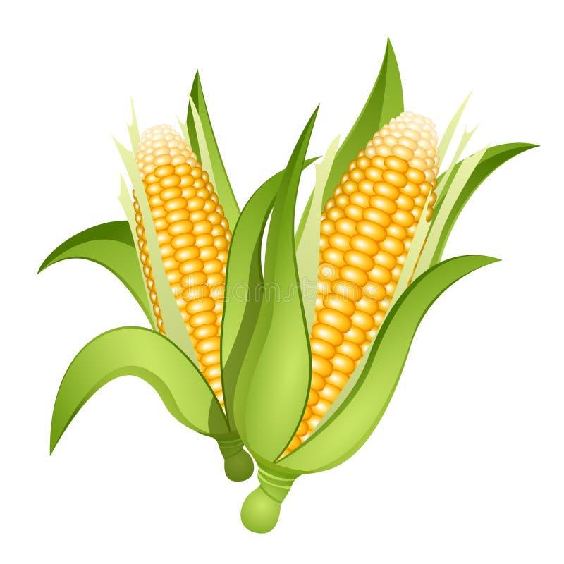 Orelhas de milho ilustração stock