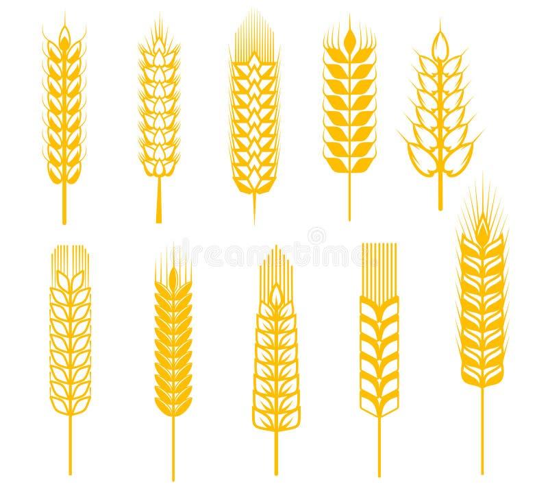 Orelhas do cereal ilustração do vetor