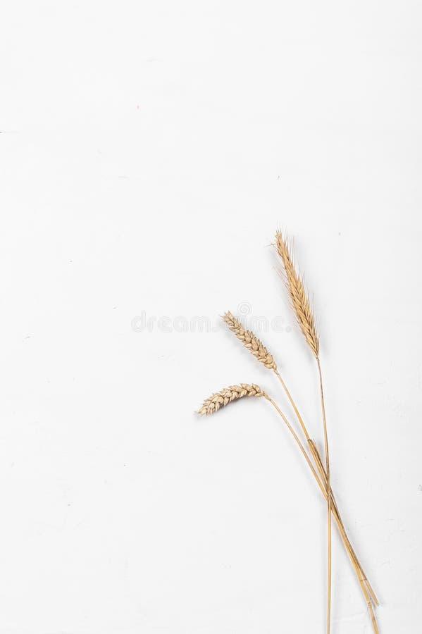 Orelhas do cereal em um fundo branco Orelhas do trigo e do centeio Vista de acima fotos de stock royalty free